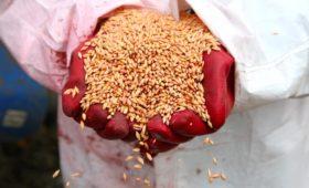 Минсельхоз предложил временно ограничить экспорт зерна из России
