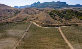 Стали известны претенденты на крымский завод марочных вин «Коктебель»