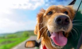 Лексус, ко мне: составлен рейтинг «автомобильных» кличек собак