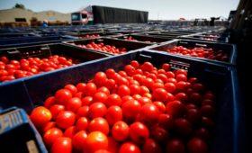 Россия запретила томаты из Азербайджана и Армении. 5 вопросов к запрету